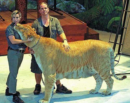 千奇百怪的世界十大杂交动物