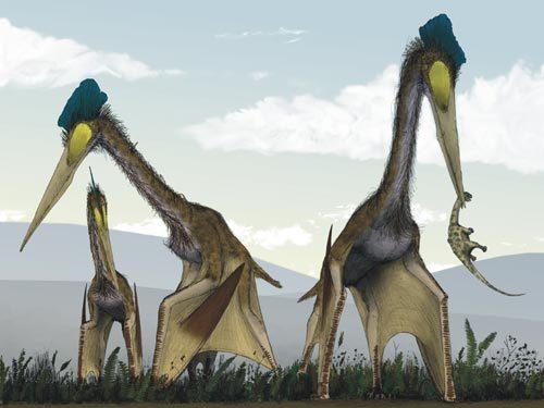 曾统治天空的五种远古飞行动物