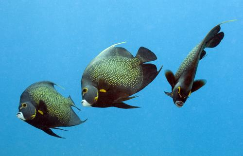 美海底世界摄影佳作之最
