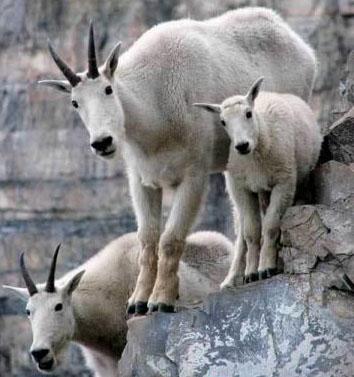 动物登山简笔画