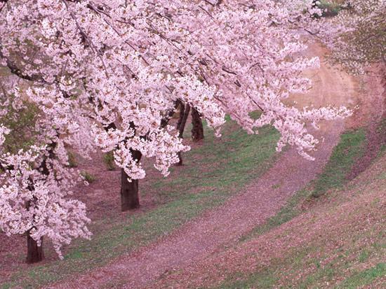 世上12条最美的林荫大道高清图片