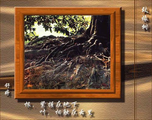 致橡树-舒婷_学科网