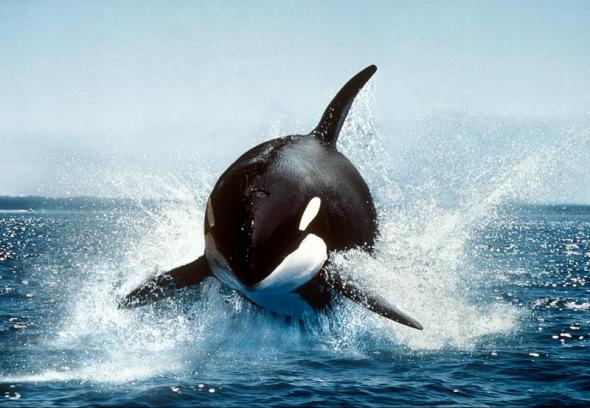 雌海豚身体结构图