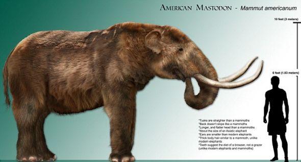 它们起源于大约5000万到6000万年前的始祖象,这种动物的外形像猪,长着