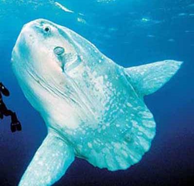 深入地球海底的未知领域对海洋与世隔绝的地带进行了