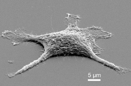 动物细胞进行防腐