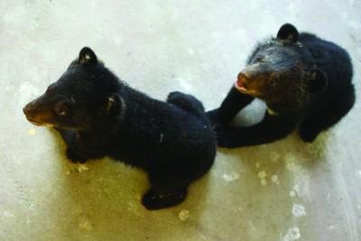 """去""""小动物托儿所""""看黑熊宝宝吧"""