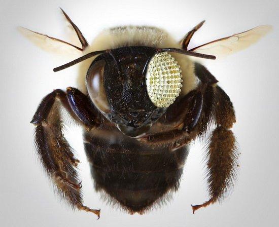 >> 资讯内容     据国外媒体报道,目前,科学家受蜜蜂和苍蝇复眼结构的