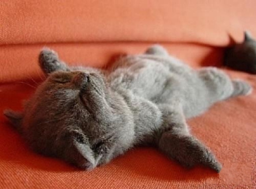 猫猫睡觉图片可爱图片