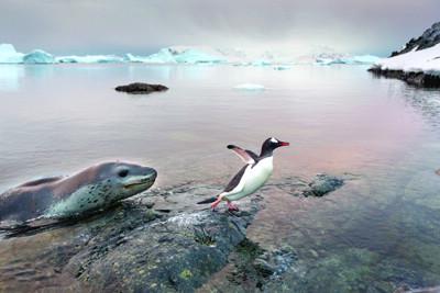 企鹅并不是这里唯一的明星,漂泊信天翁在空中盘旋,笨重的海象懒洋洋地