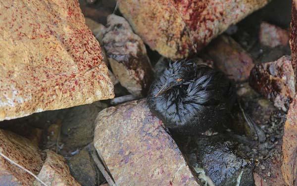 青岛泄油污染候鸟栖息地