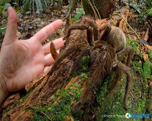 组图 2014年最奇特的九大动物发现