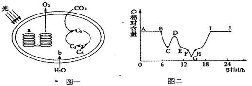 如下面所示,图一为叶绿体结构与功能示意图,图二表示一株小麦叶片细胞
