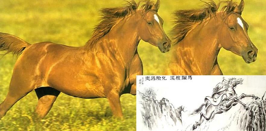 三国时期刘备的坐骑