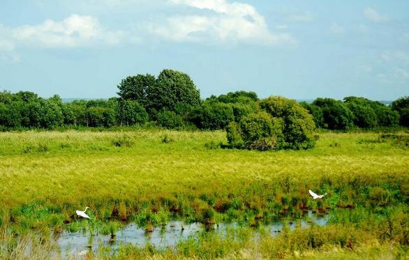 关注湿地:探秘黑瞎子岛湿地