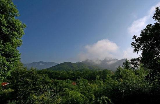 大红袍景区位于武夷山风景区中部的九龙窠.
