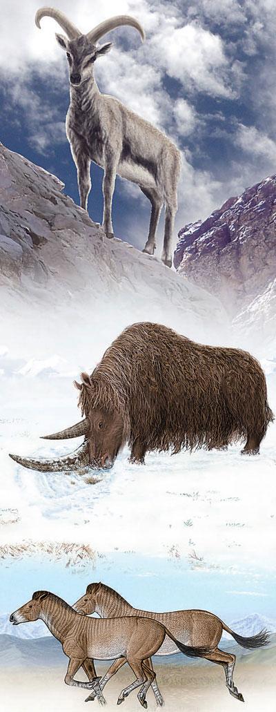 中国科学家推翻冰期动物起源于北极圈猜想(图)