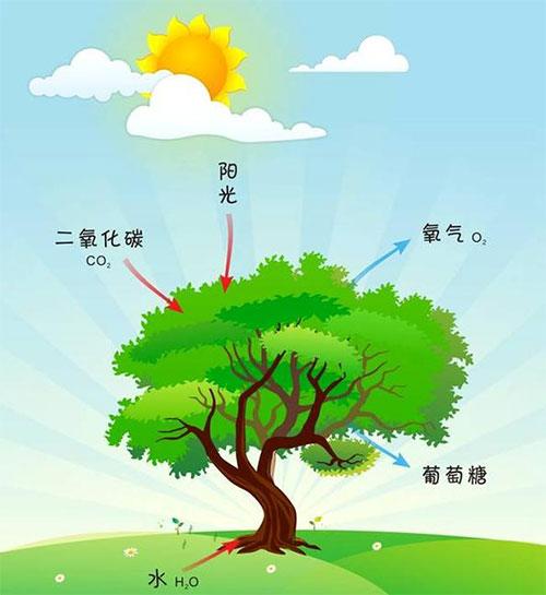 绿化好处多_立体绿化_绿化效果图