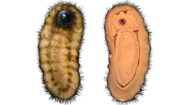 最早软体动物像鼻涕虫