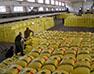 为什么化肥有被完全替代的可能?